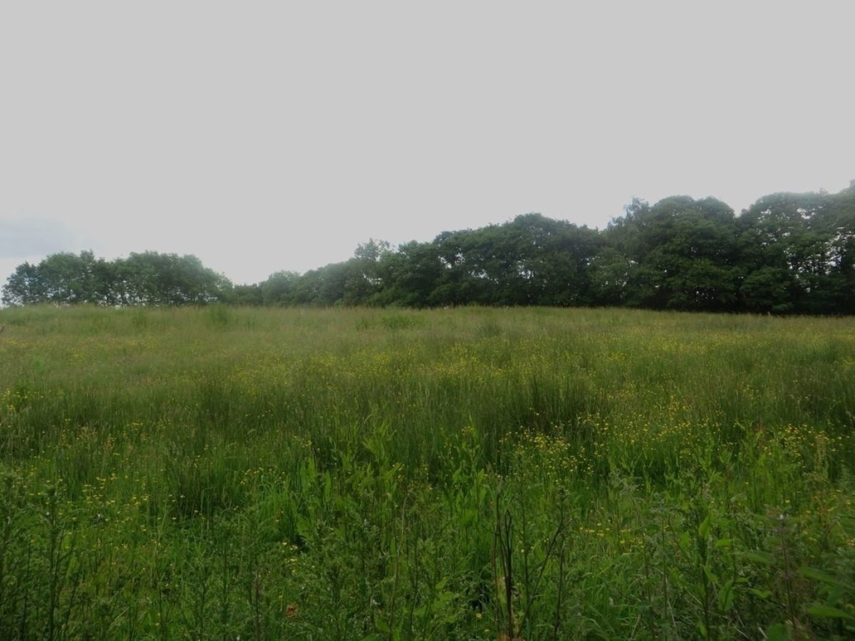 Plessey Woods Park large photo 1