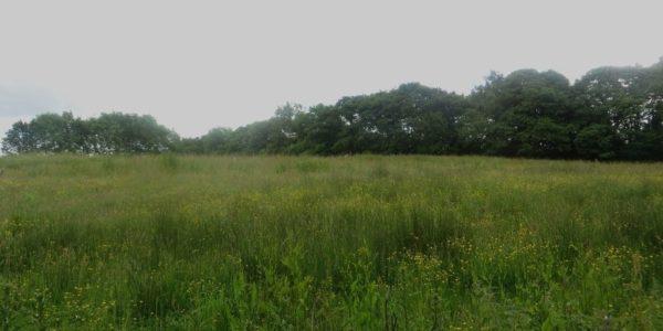 Druridge Bay Country Park