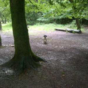 Plymbridge
