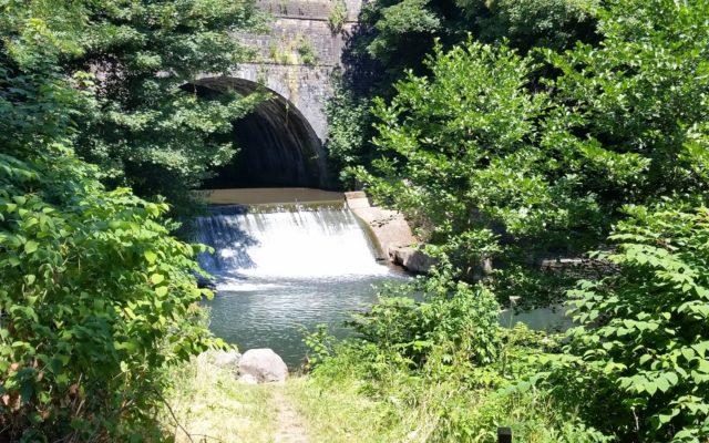 Pontymoile Canal Basin Dog walk in Torfaen