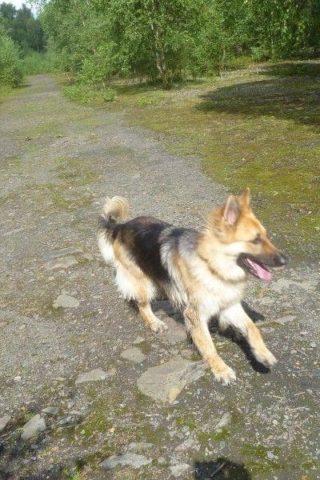 Dog walk at Pooley Country Park photo