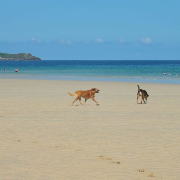 Dog walk at Porth Kidney