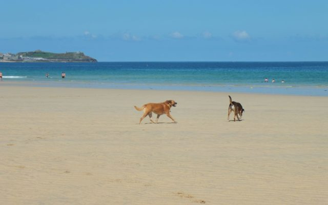 Porth Kidney Dog walk in Cornwall