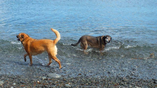 Dog walk at Porthustock