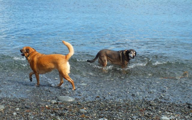 Porthustock Dog walk in Cornwall