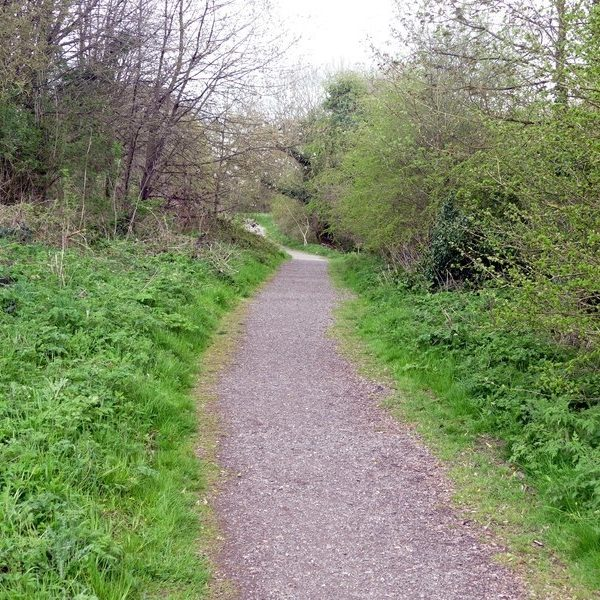 Dog walk at Portland Park - Kirkby in Ashfield