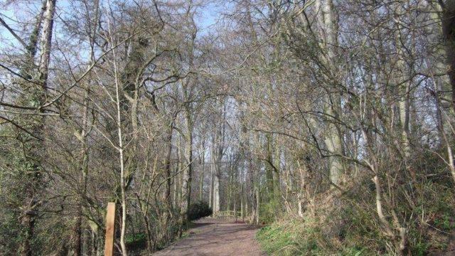 Dog walk at Preston Park