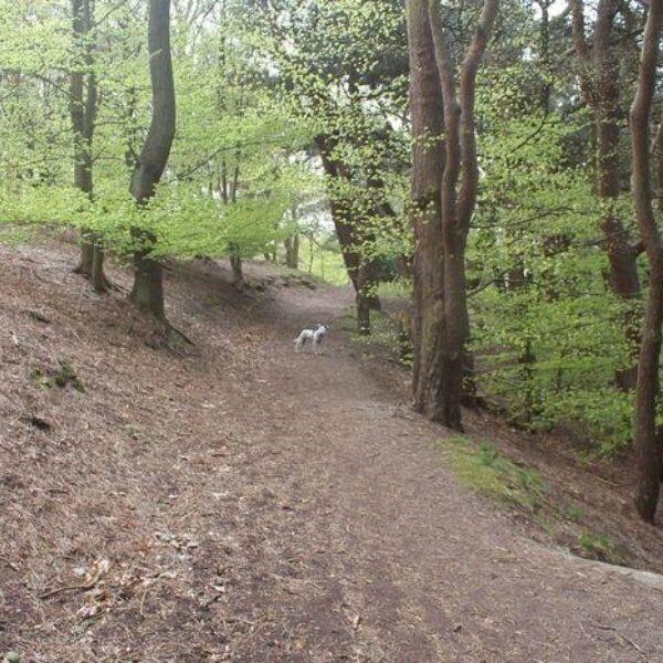 Prince Of Wales Park, Bingley photo 3