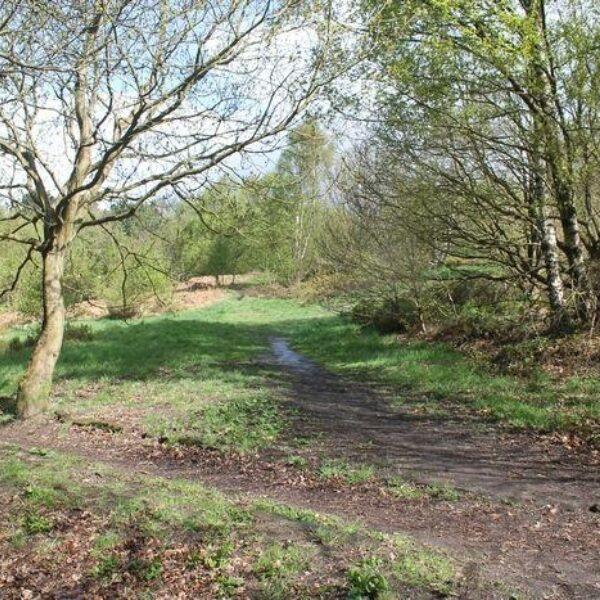 Dog walk at Prince Of Wales Park, Bingley