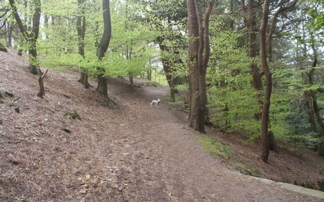 Prince Of Wales Park, Bingley Dog walk in Yorkshire (West)