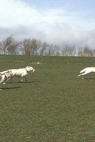 Dog walk at Pugneys Country Park photo