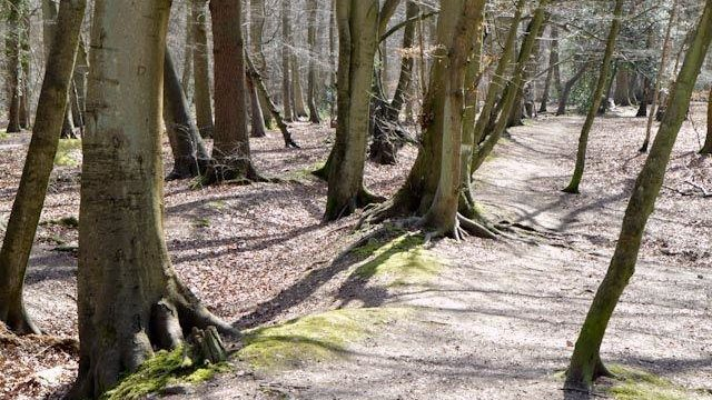 Dog walk at Pullingshill Wood, Walking The Trenches