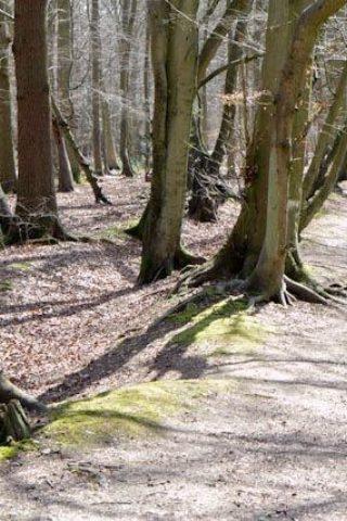 Dog walk at Pullingshill Wood, Walking The Trenches photo