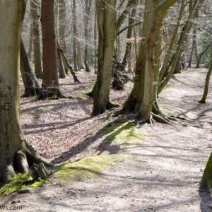 Pullingshill Wood, Walking The Trenches