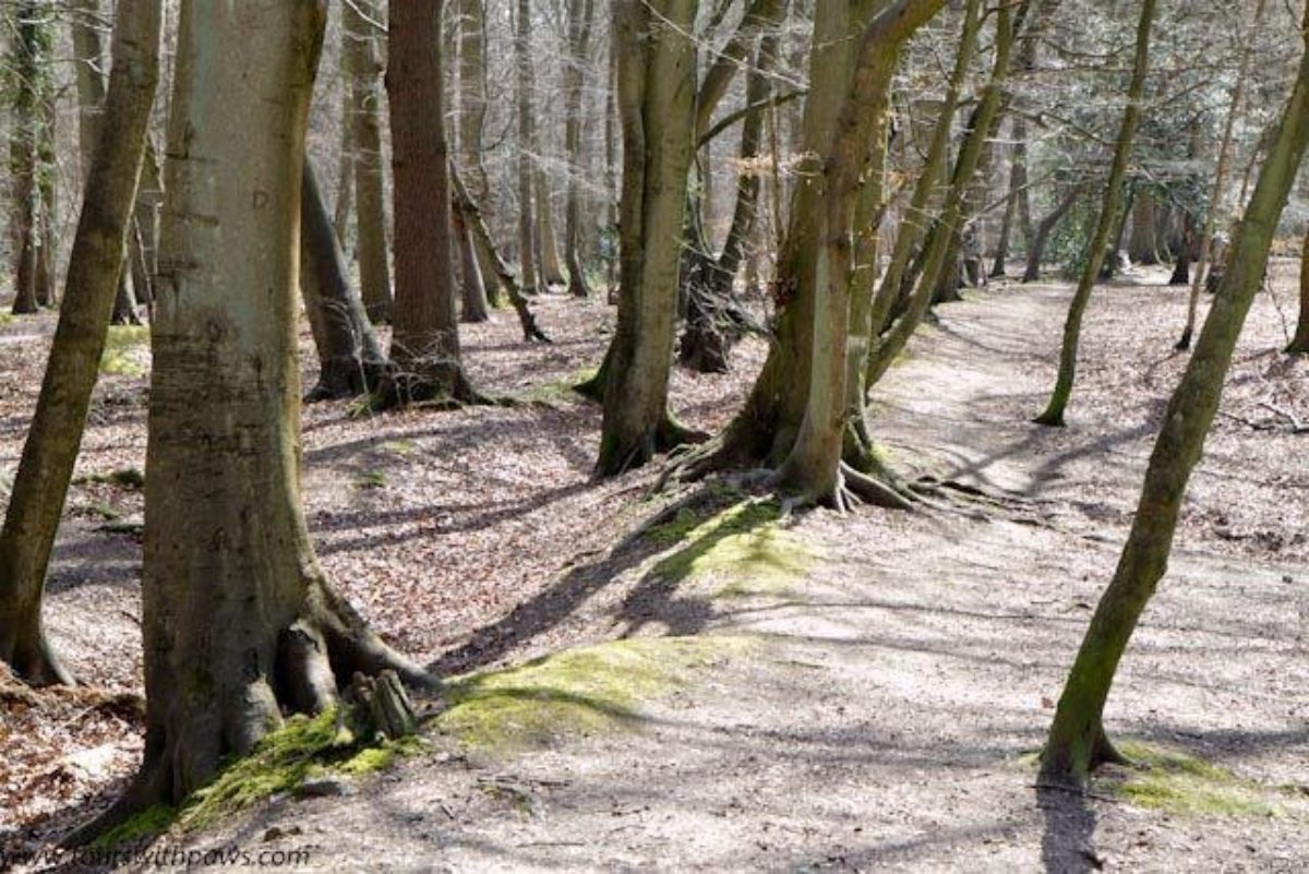 Pullingshill Wood, Walking The Trenches large photo 1