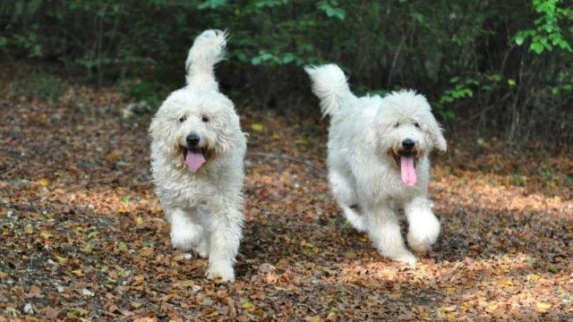 Dog walk at Queen Elizabeth Country Park