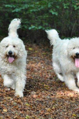 Dog walk at Queen Elizabeth Country Park photo