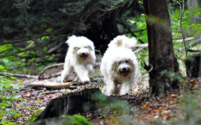Queen Elizabeth Country Park Dog walk in Hampshire