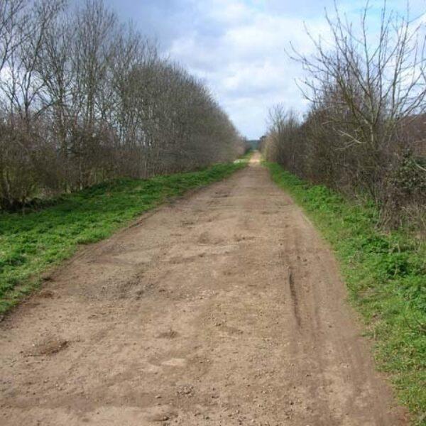 Dog walk at Raunds Mill Lane