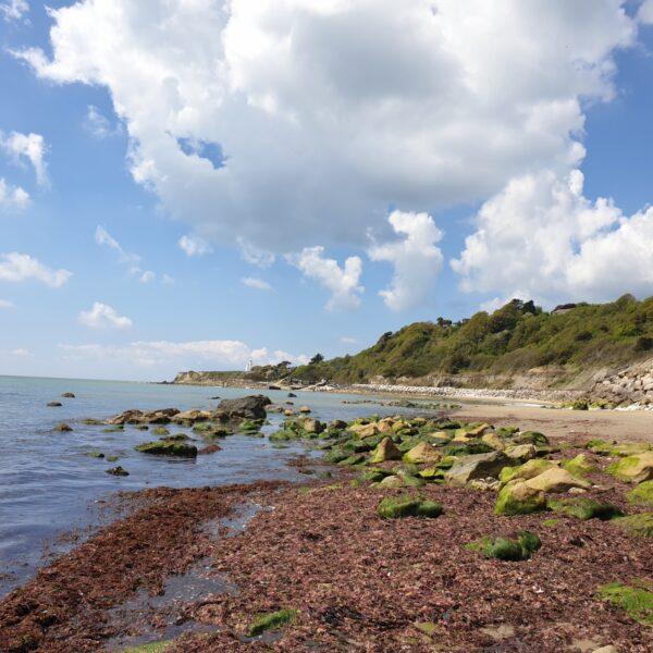 Dog walk at Reeth Bay