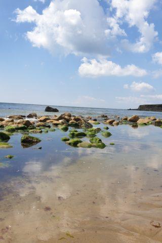 Dog walk at Reeth Bay photo