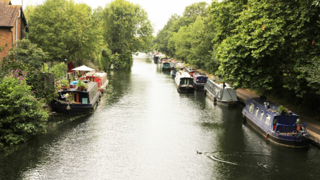 Dog walk at Regents Canal