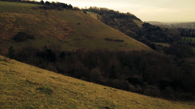 Dog walk at Reigate Hill, North Downs Way