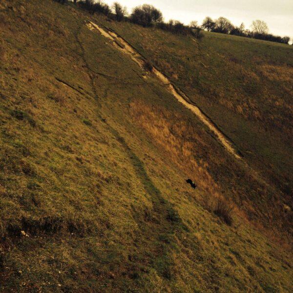 Dog walk at Reigate Hill, North Downs Way