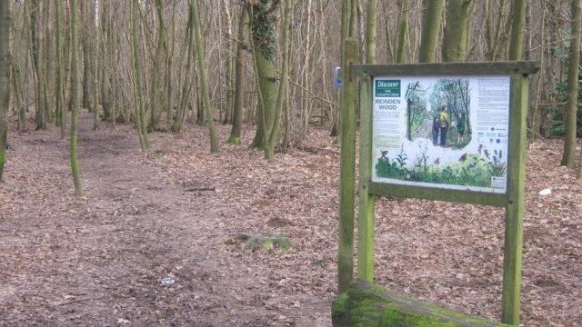 Dog walk at Reinden Woods