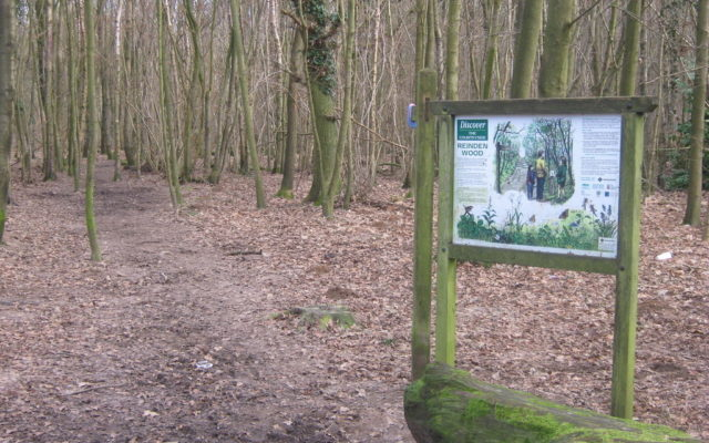 Reinden Woods Dog walk in Kent