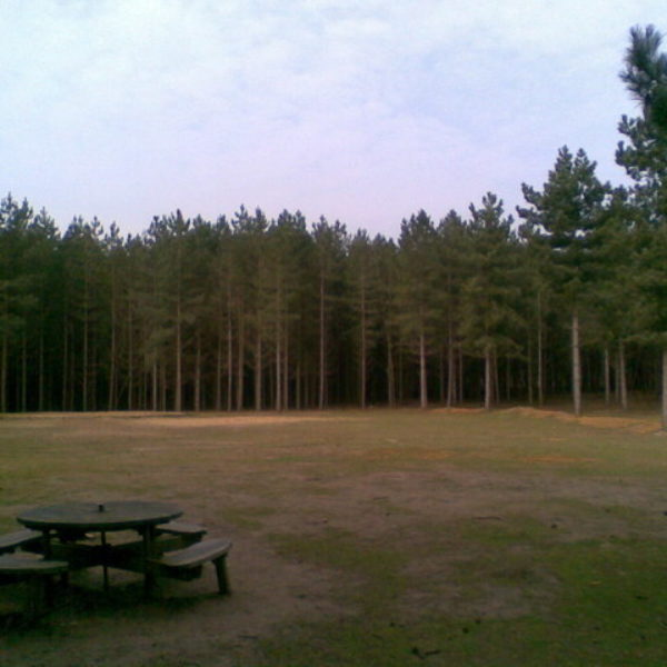 Rendlesham Forest photo 1