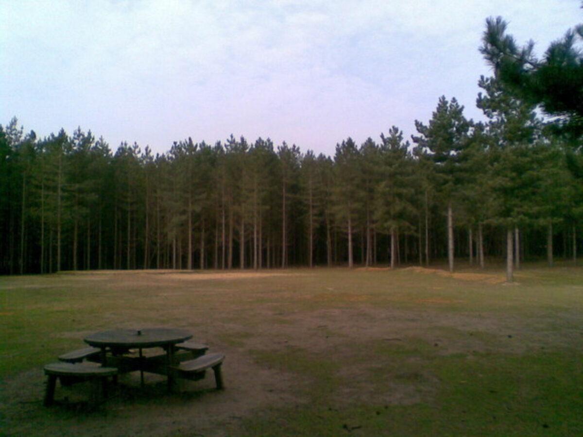 Rendlesham Forest large photo 1