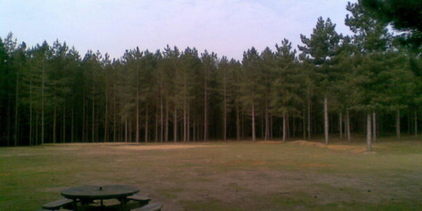 Rendlesham Forest