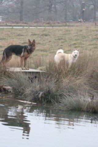 Dog walk at Richmond Park photo