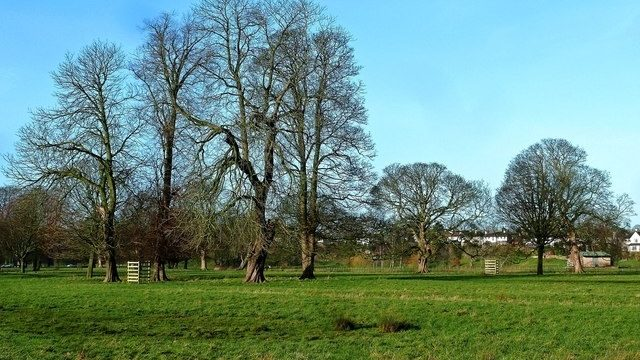 Dog walk at Rickerby Park