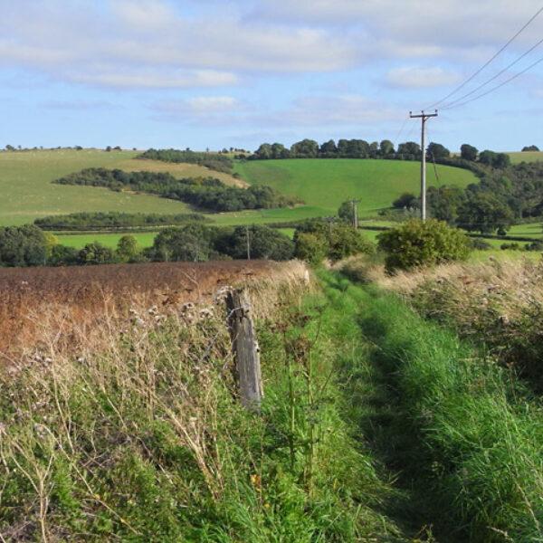 Dog walk at Ridgeway Circular