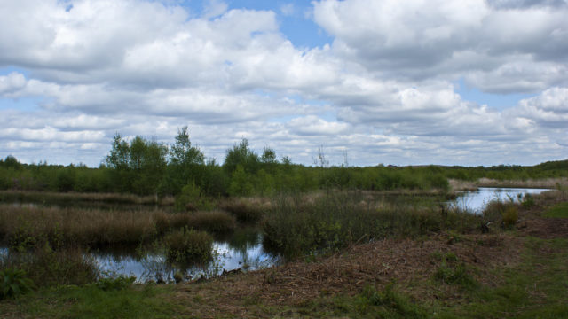 Dog walk at Risley Moss Nature Reserve
