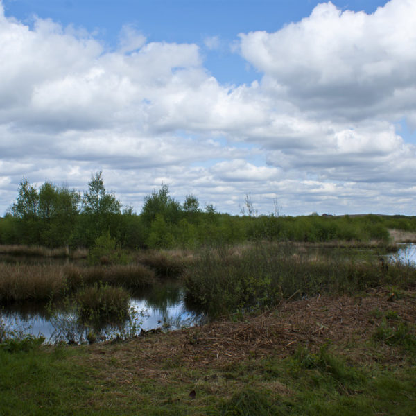 Risley Moss Nature Reserve photo 1