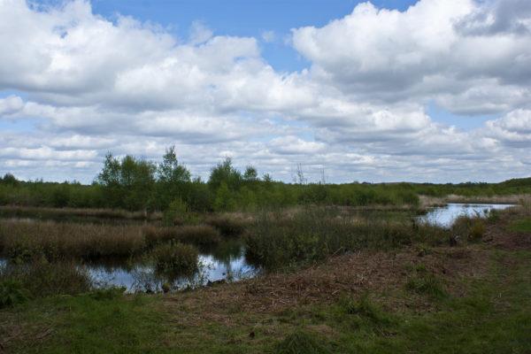 Risley Moss Nature Reservephoto