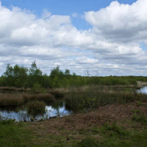 Risley Moss Nature Reserve