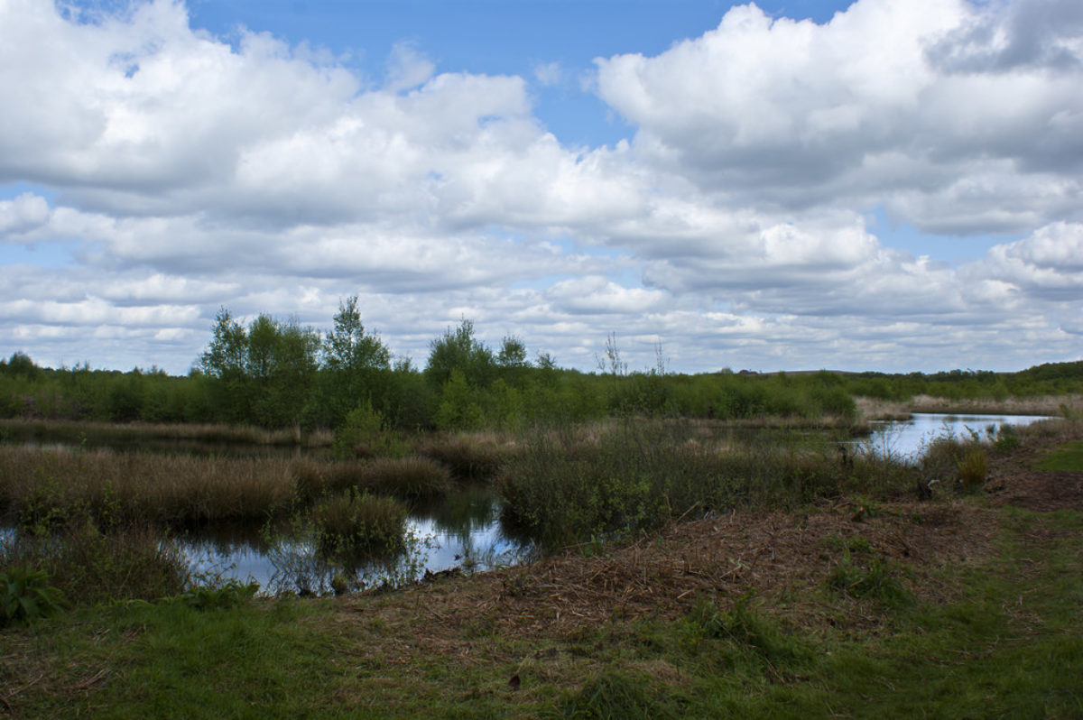 Risley Moss Nature Reserve large photo 1