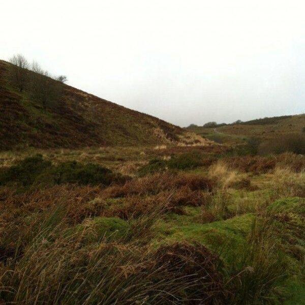 Dog walk at River Avon Dam, Dartmoor