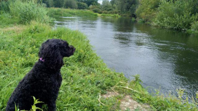 Dog walk at River Avon - Somerley, Hampshire