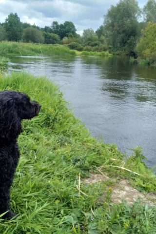 Dog walk at River Avon - Somerley, Hampshire photo