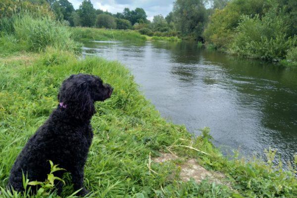 River Avon - Somerley, Hampshirephoto