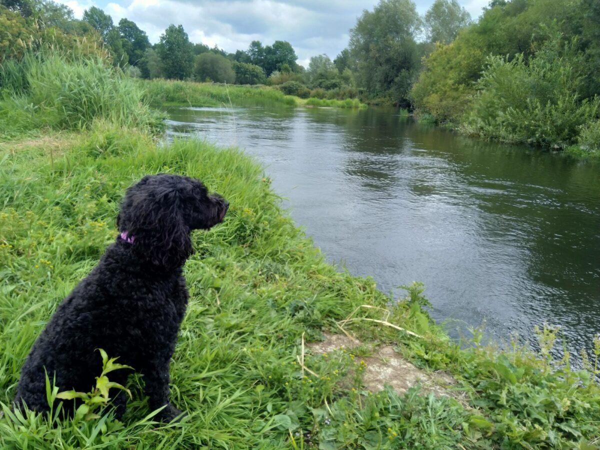 River Avon - Somerley, Hampshire large photo 1