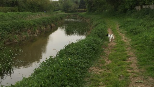 Dog walk at River Foss, Huntington