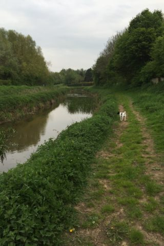 Dog walk at River Foss, Huntington photo