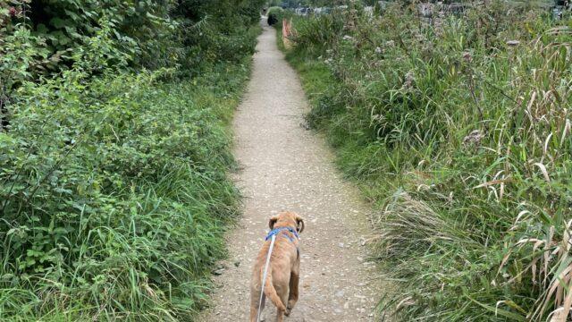 Dog walk at River Kennet & Cunning Man