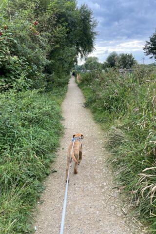 Dog walk at River Kennet & Cunning Man photo